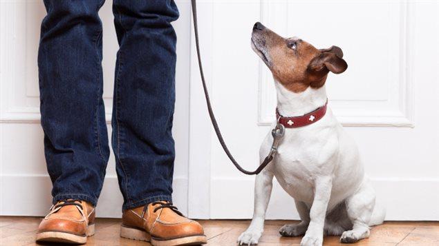 Un chien et son maître