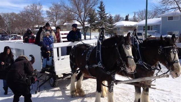 Des calèches tirées par des cheveaux lors de la troisième édition du Carnaval d'hiver fransaskois de Regina.