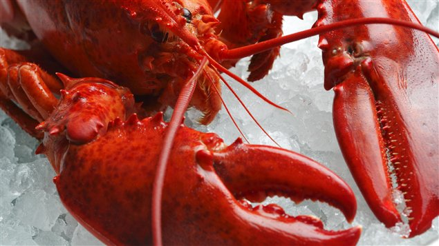 Le homard, produit raffiné, ne l'a pas toujours été