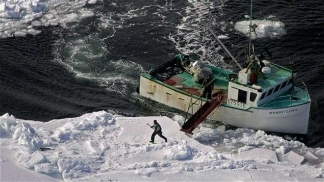 Un chasseur se dirige vers un phoque du Groenland lors de la chasse annuelle sur la côte Est du Canada. Photo prise en 2009
