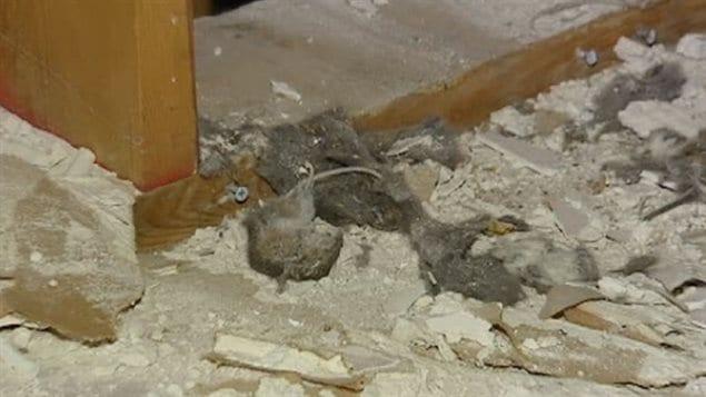 L 39 acqu reuse d 39 une maison envahie de souris poursuit l 39 ancien propri taire ici radio - Voir ma maison en direct ...