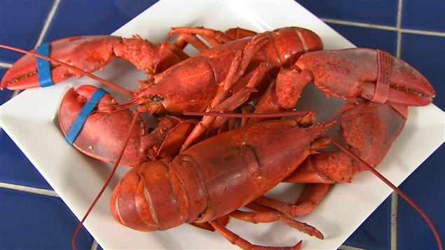 Le homard frais du Québec est arrivé !