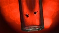 Maladie de Lyme:la situation stable en Mauricie et au Centre-du-Québec