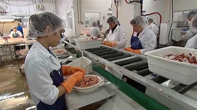 Des travailleurs étrangers temporaires canadiens.