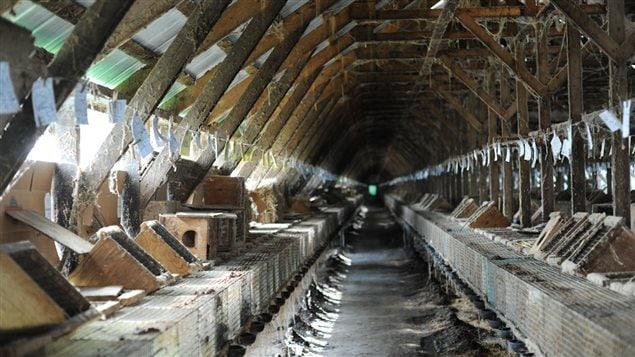 Une centaine de renards et 2000 visons sont élevés dans cette ferme de la région de Saint-Hyacinthe.