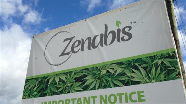 Marijuana médicale : une étape cruciale pour Zenabis à Atholville - ICI.Radio-Canada.ca