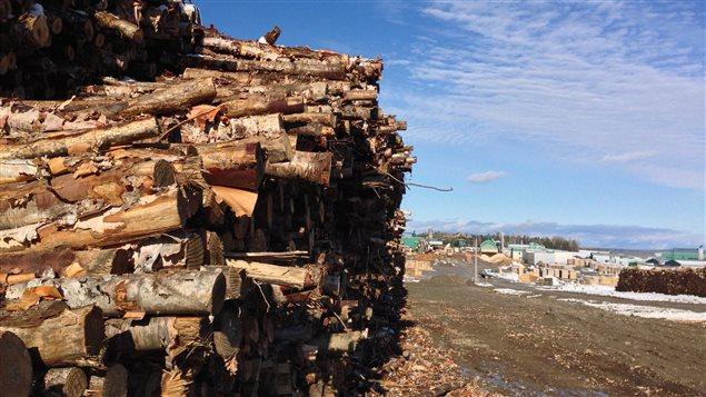 Une rangée de trons d'arbres coupés.