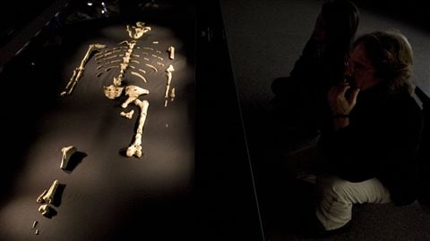 Les ossements de Lucy