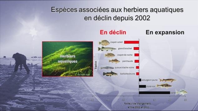 Espèces associées aux herbiers aquatiques en déclin depuis 2002
