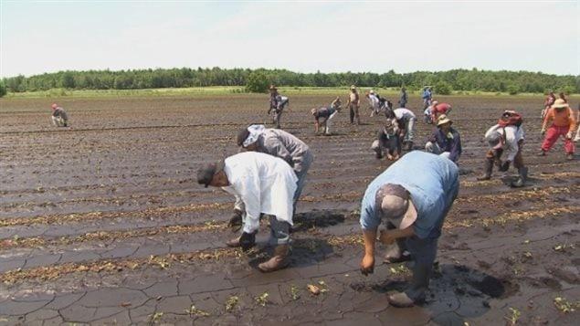 Travailleurs étrangers temporaires