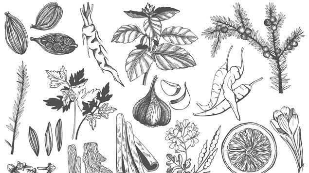 Une illustration de légumes et de produits de la forêt