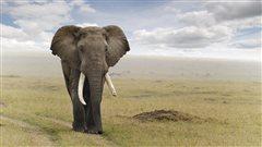 Le Kenya veut en finir avec le commerce de l'ivoire