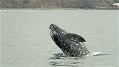 Cohabitation possible entre le trafic maritime et les animaux marins