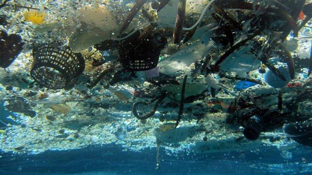 Des déchets de plastique à Hanauma Bay, Hawaii