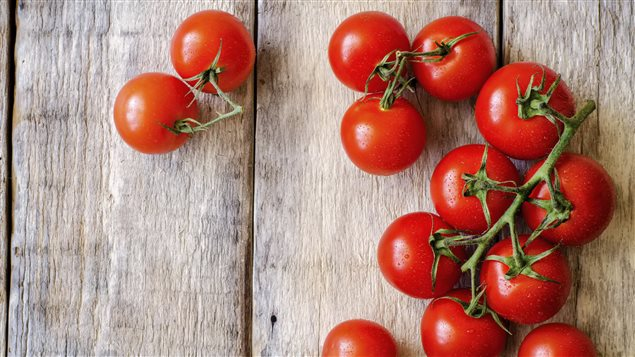 La tomate doit être cultivée dès les premiers rayons de soleil du printemps.