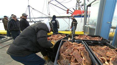 Des pêcheurs de crabe des neiges