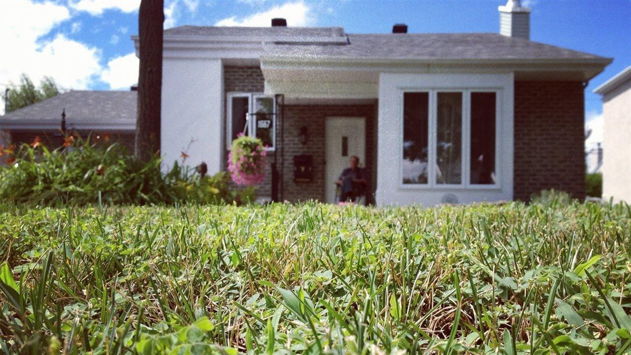 La recherche de la pelouse parfaite premi re plus for Recherche tonte de pelouse