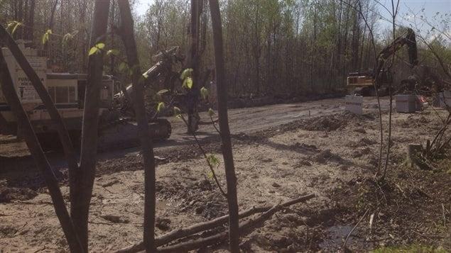 Des travaux dans le boisé Maricourt de Longueuil, qui abrite de nombreux milieux humides