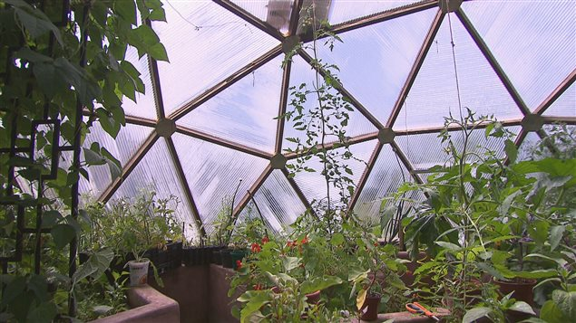 Faire pousser ses propres l gumes l 39 ann e presque - Faire pousser des legumes en interieur ...