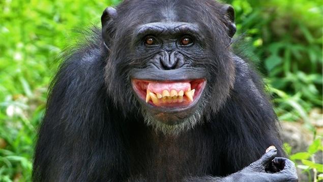 Les amours entre humains et singes sont choquantes, mais elles fascinent depuis la nuit des temps.