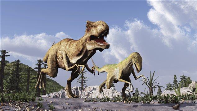 Un tyrannosaure chasse un vélociraptor.