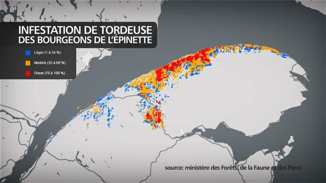 Les secteurs infestés par la tordeuse au Bas-Saint-Laurent et en Gaspésie.