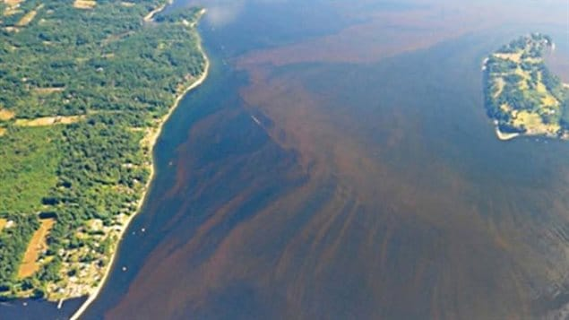 maree-rouge-algues