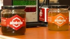 Alvéole : du miel cultivé en ville sans pesticides
