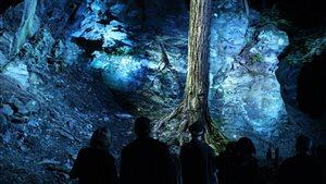 Visite de Foresta Lumina, la mise en lumière du Parc de la Gorge de Coaticook