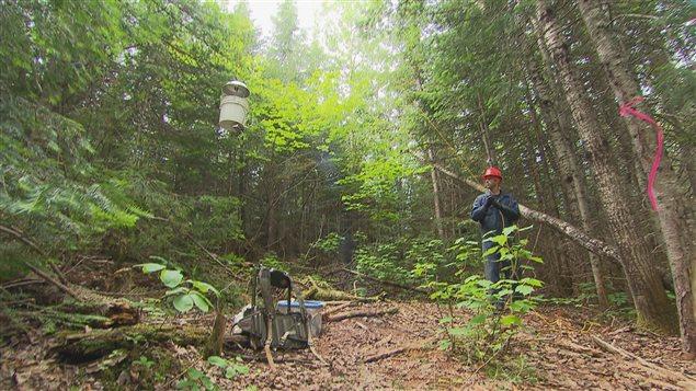 Un technicien forestier ramène au sol un piège à papillons de tordeuse