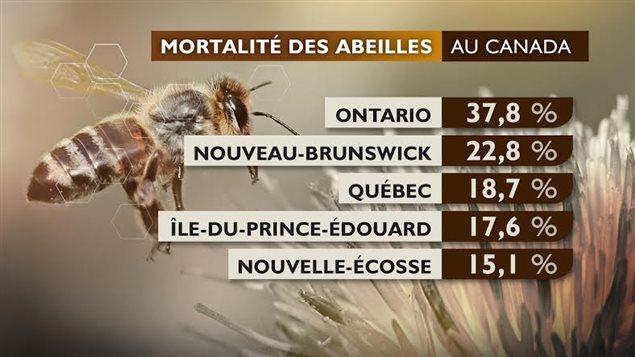 La mortalité des abeilles au Canada