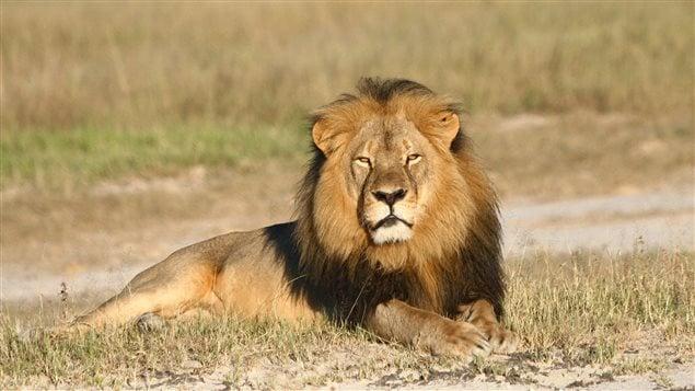 Cecil le lion