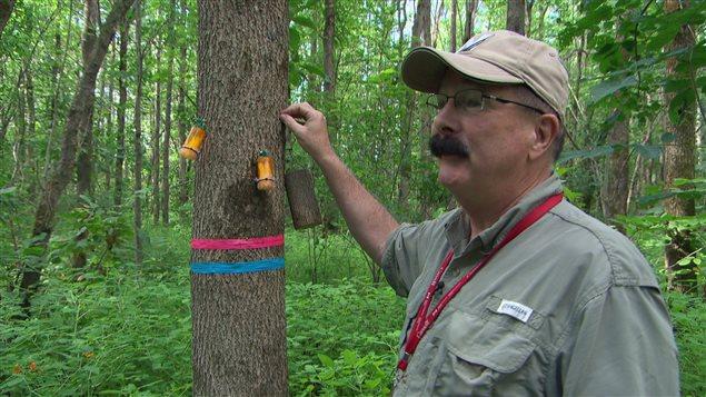 L'entomologiste Barry Lyons, du ministère des Richesses naturelles du Canada