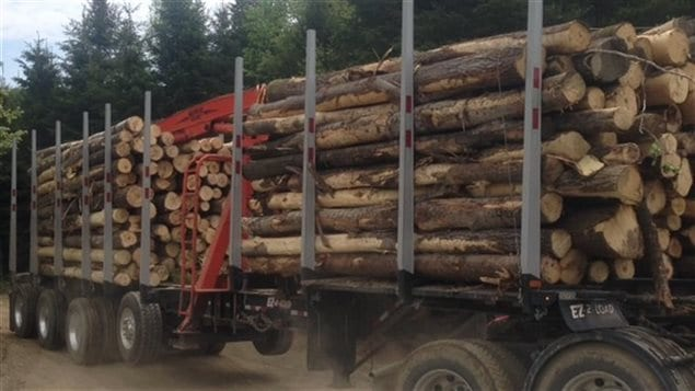 Les camions transportent le bois à l'extérieur de la forêt