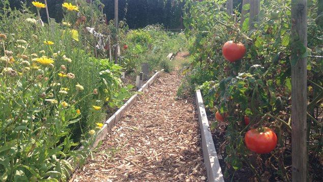 Le jardin communautaire De Lorimier, dans l'arrondissement Le Plateau Mont-Royal