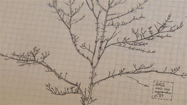 Chaque arbre pousse selon une architecture propre à son espèce.