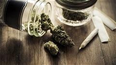 Légalisation de la marijuana : ce que devra contenir la loi