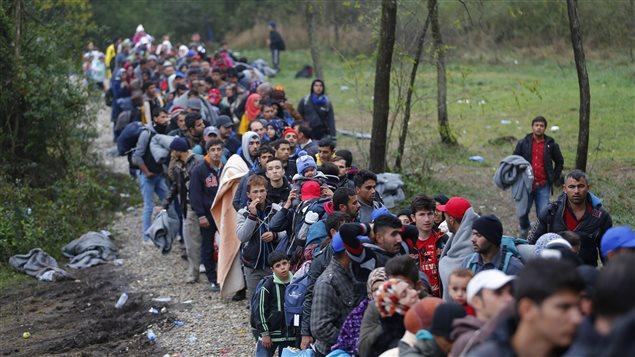 Des migrants franchissent la frontière entre la Croatie et la Hongrie afin d'atteindre l'Union européenne.