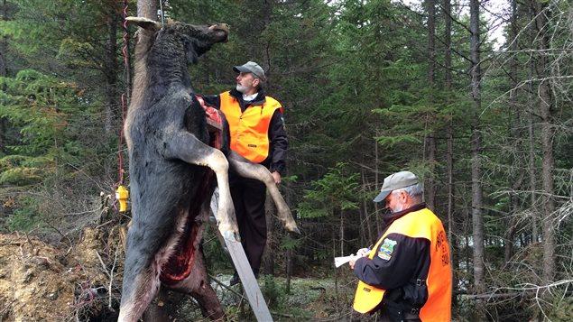 Les agents vérifient toujours que deux coupons aient été apposés sur les bêtes abattues.