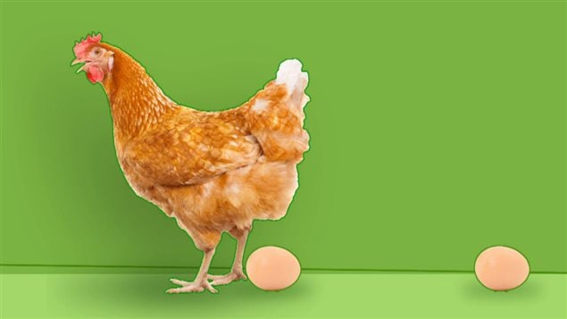 Combien d'oeufs une poule pond-elle par année?