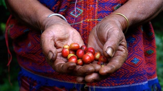 Le commerce équitable change la vie des petits producteurs.