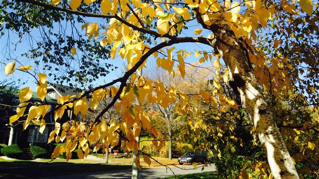 L'automne à Windsor