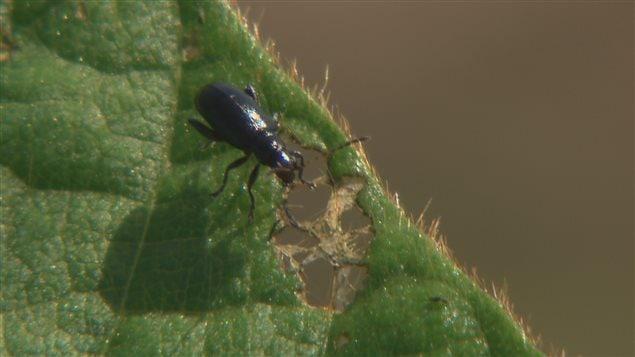 Un insecte mange une plante