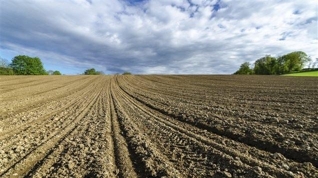 Un champ labouré
