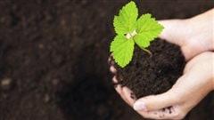 En préparation de la saison de jardinage