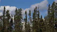 La forêt boréale sous pression