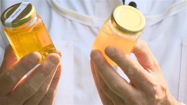 Du miel produit à Terre-Neuve