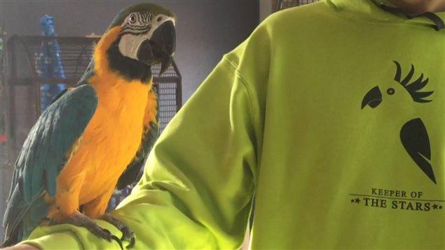 Le refuge Keeper of the Stars Parrot Rescue & Sanctuary a accueilli 26 perroquets depuis son ouverture au mois de mai.