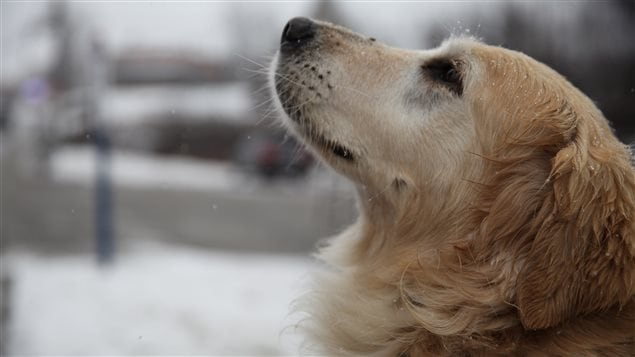 Image générique chien