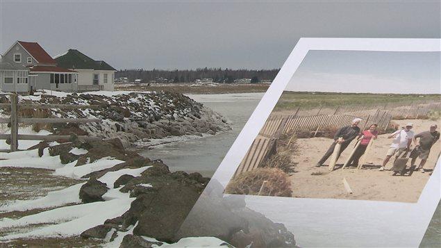 Les sapins de Noël recyclés sont utilisés pour protéger les dunes.